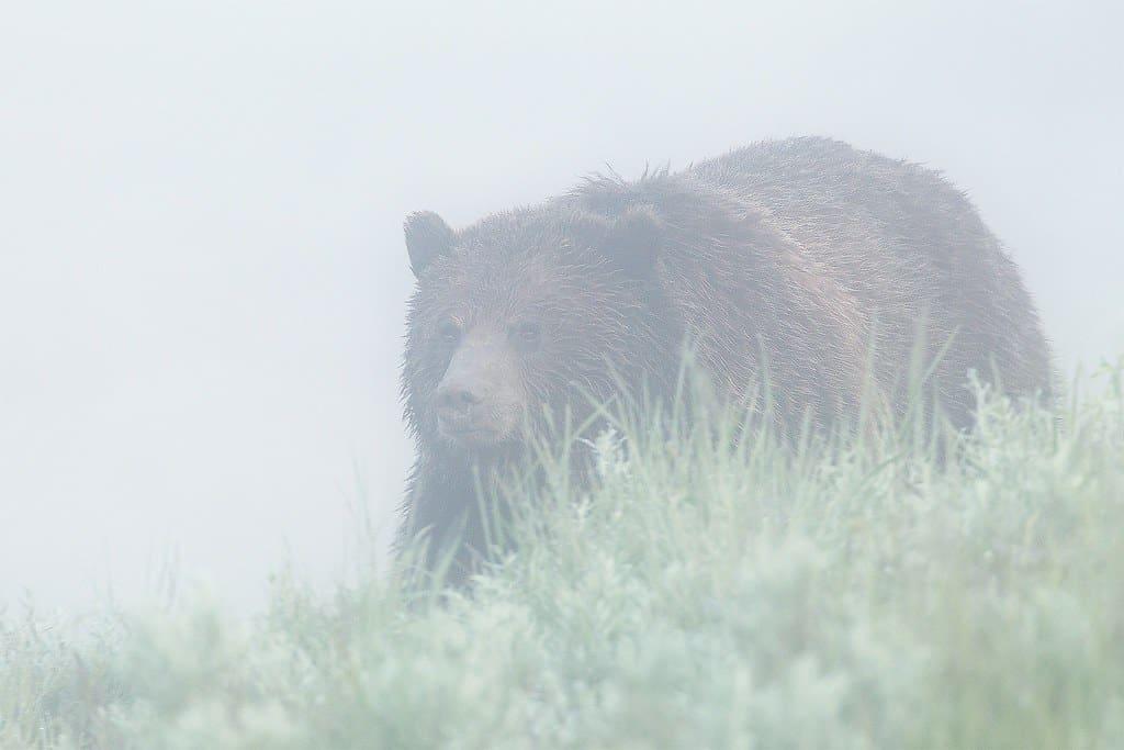 the foggy danger of non financial risks